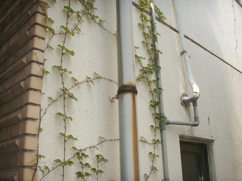 外壁に植物のつる